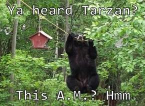 Ya heard Tarzan?   This A.M.? Hmm