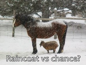 Raincoat vs chance?