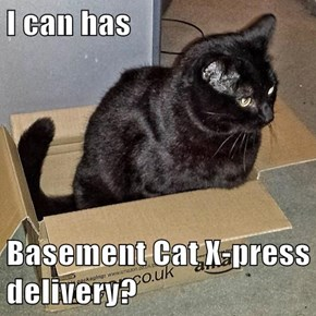 I can has  Basement Cat X-press delivery?