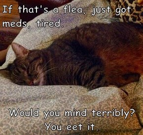 If that's a flea, just got meds, tired.  Would you mind terribly? You eet it.