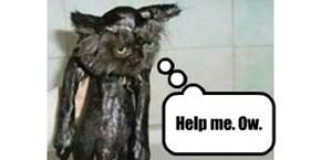 Sad Panther