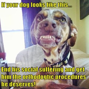 If your dog looks like this...  End his social suffering and get him the orthodogtic procedures he deserves!