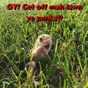 OY! Get off mah lawn ye punkz!!