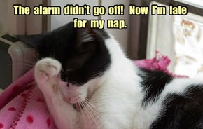 The  alarm  didn't  go  off!   Now  I'm  late  for  my  nap.