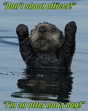 """""""Don't shoot officer!""""  """"I'm an otter not a dog!"""""""