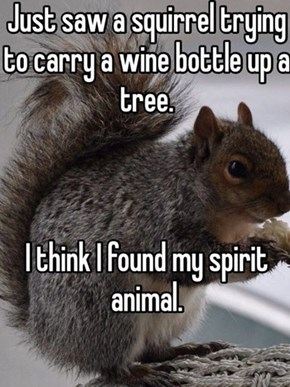 The Squirrel Has a Good Night Planned