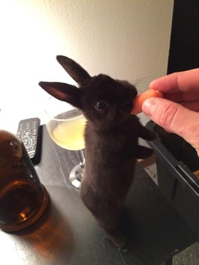 This Carrot and Wine Pair Nicely