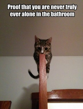 Proof that you are never truly ever alone in the bathroom