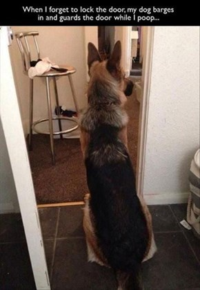 Maybe He Thinks Your Keeping Watch During Walks