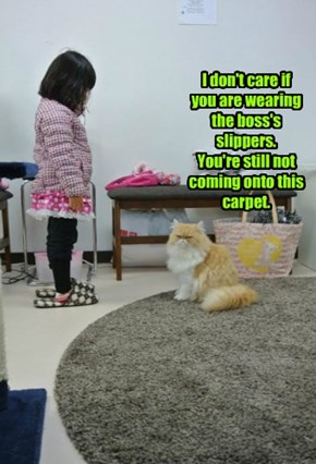 I don't care if you are wearing the boss's slippers.  You're still not coming onto this carpet.