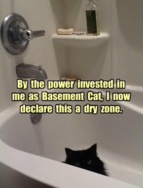 By  the  power  invested  in  me  as  Basement  Cat,  I  now  declare  this  a  dry  zone.