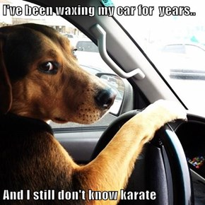 Dad Joke Dog Takes a Road Trip