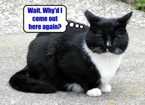 The Real Reason Cats Can't Seem To Make Up Their Minds.