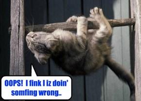 Monorail Cat Trainee..