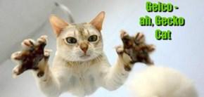Geico -  ah, Gecko  Cat