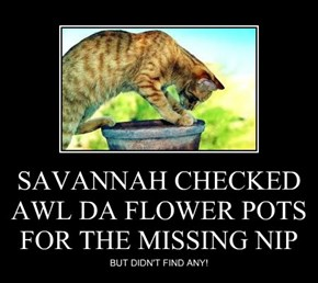 SAVANNAH CHECKED AWL DA FLOWER POTS FOR THE MISSING NIP