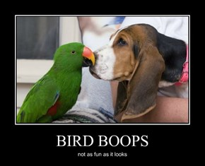 BIRD BOOPS