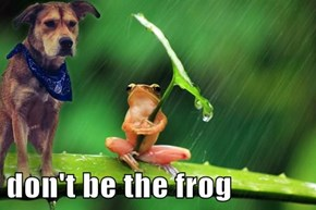 don't be the frog