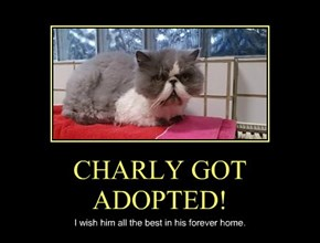 CHARLY GOT ADOPTED!