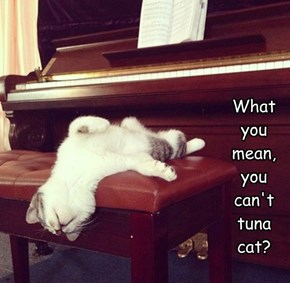 What you  mean, you can't tuna cat?
