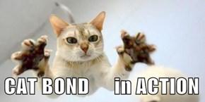 CAT BOND      in ACTION