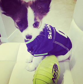 A Quarterback of Cute: Ruffell Wilson