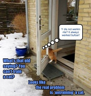 Cats... always getting themselves into such a-door-able predicaments
