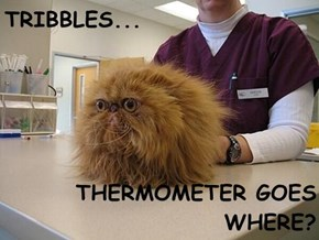 TRIBBLES...  THERMOMETER GOES WHERE?