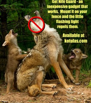 How to Keep Coyotes Away