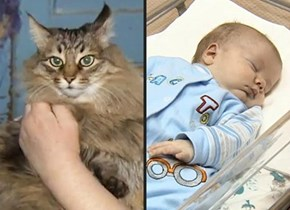 Homeless cat saves abandoned baby in Russia