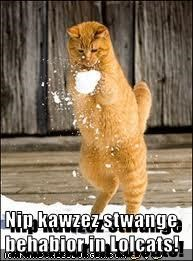 Nip kawzez stwange behabior in Lolcats!