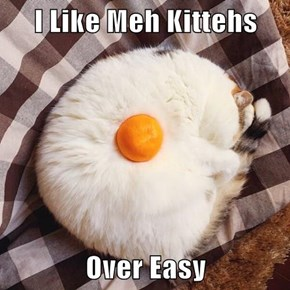 I Like Meh Kittehs  Over Easy