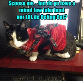 Scoose me, - but do yu have a  minot tew tako bout  our LOL de Celing Cat?