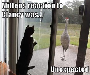 Mittens reaction to                          Clancy was...  Unexpected