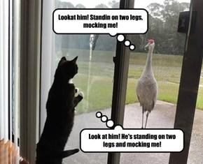 Lookat him! Standin on two legs, mocking me!
