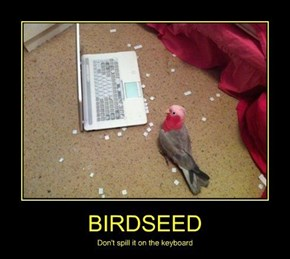 It Can Peck Out the Keys?