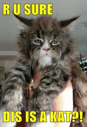 R U SURE  DIS IS A KAT?!