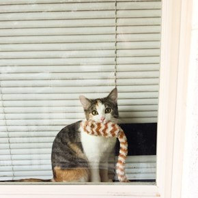Peaches is Sending a Message to the Neighborhood Squirrels
