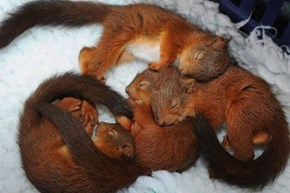 If You Didn't Squee Over These LIttle Squirrels, You're Nuts