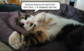 Lazy Kat