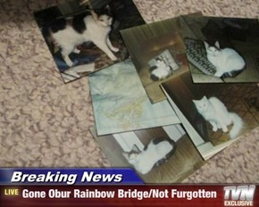 Breaking News - Gone Obur Rainbow Bridge/Not Furgotten