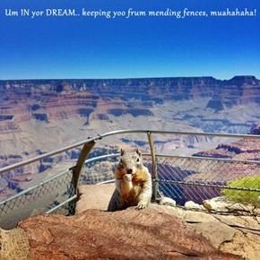 Um IN yor DREAM.. keeping yoo frum mending fences, muahahaha!