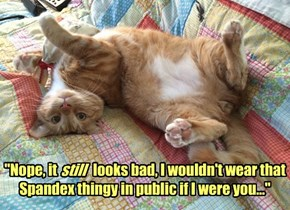 Wise Kitteh's Fashion Advice