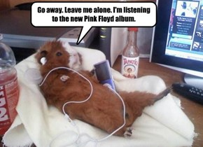 Go away. Leave me alone. I'm listening to the new Pink Floyd album.