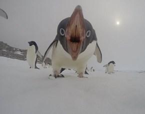 Contest: Caption this Penguin!