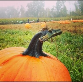 There Be Dragons in That There Squash!