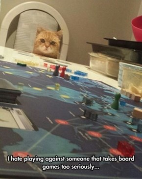 Kitty doesn't like cheaters