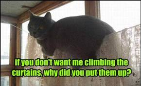 if you don't want me climbing the curtains, why did you put them up?