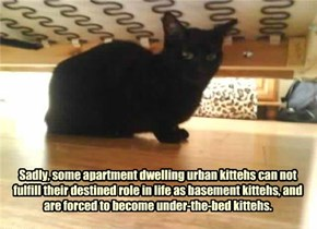 Sadly, some apartment dwelling urban kittehs can not fulfill their destined role in life as basement kittehs, and are forced to become under-the-bed kittehs.