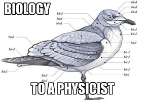 Physicists Are Good at Labeling Birds